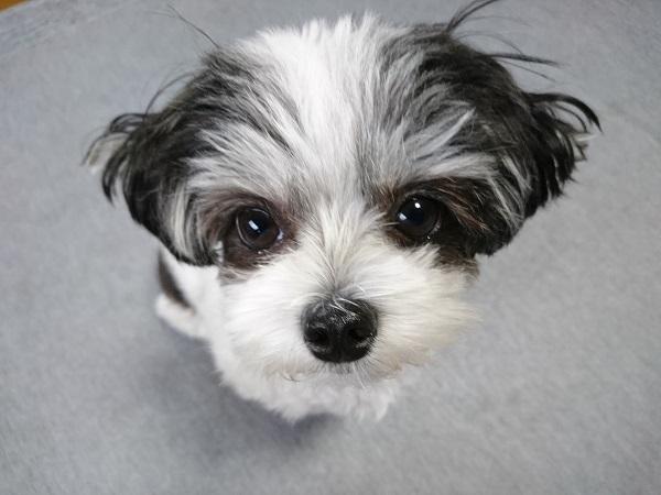 毎日犬を散歩に連れて行っても良いものなのか?トイレについて心配になった事。