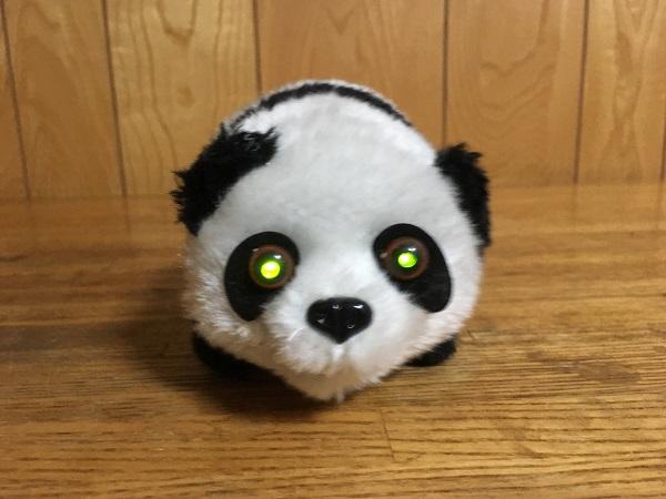 チワマルひまりにパンダのおもちゃをあげてみた。